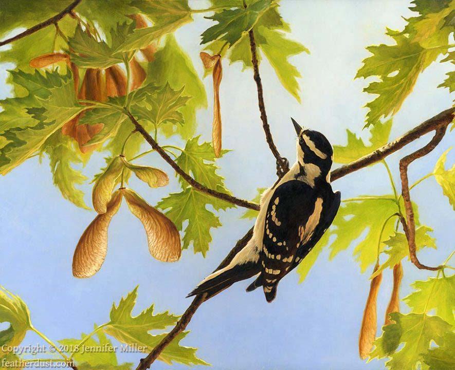 """Jennifer Miller """"Wings of Spring - Downy Woodpecker"""" 11x14 oil $1,200. SOLD"""