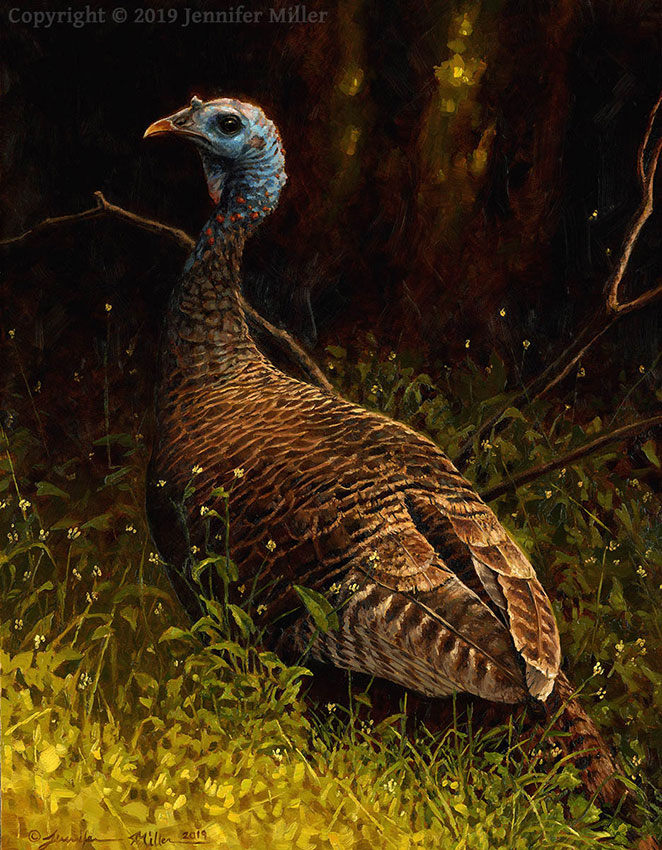 "Jennifer Miller ""Woodland Queen - Eastern Wild Turkey"" 12x9 oil $1,100. Inquire"