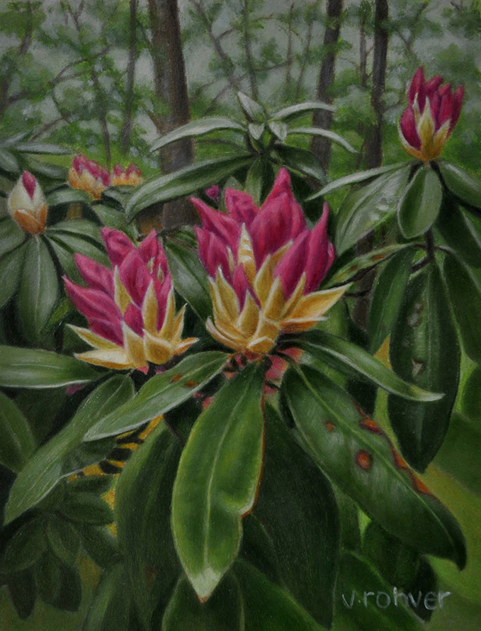 "Valorie Rohver ""Rhododendron Blossom"" 8x6 oil $295."