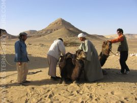 Preparing a camel trek