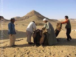 Preparing a camel trek