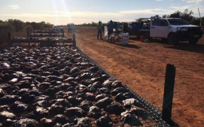 Collective Action Against Pests