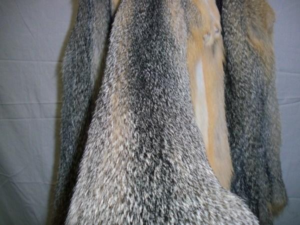 Western Grey Fox