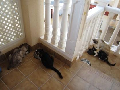 Four street cats