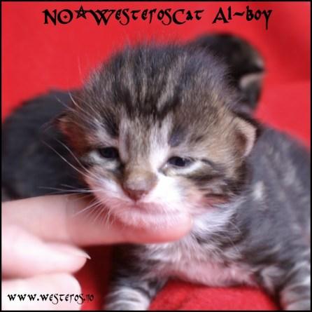 Alaric boy 2 weeks old