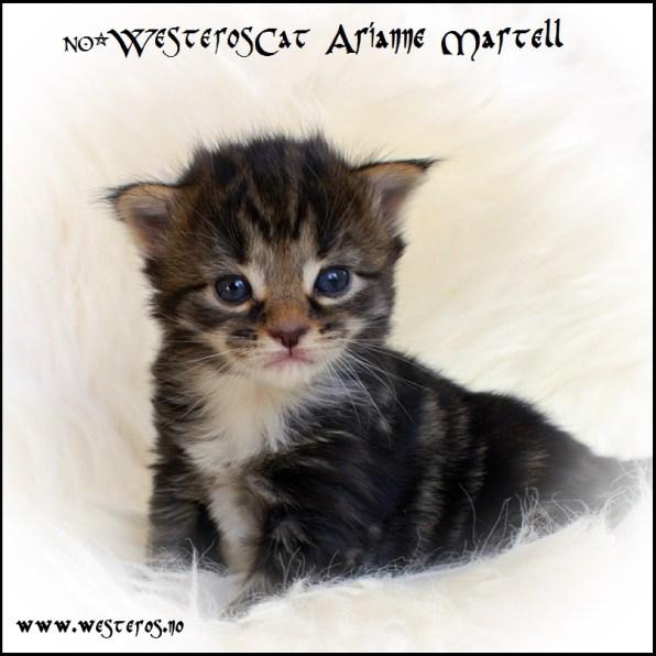 Arianne 3 weeks