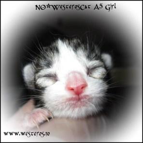Arya newborn