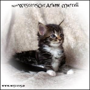 Arianne 5,5 weeks