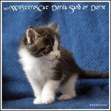 Dorea 5,5 weeks