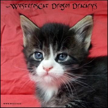 Drogon 5w