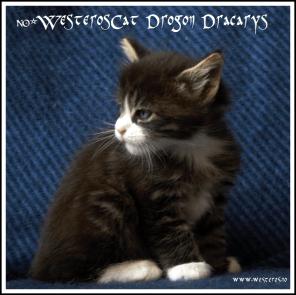 Drogon 5,5 weeks old