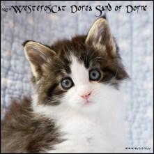 Dorea