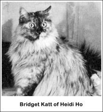 Heidi Ho Bridget Katt t
