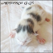G1 Girl MCO g 02 21 - 3 days old