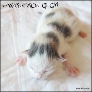 G1 Girl MCO g 02 21 - 3 days old