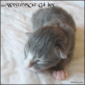 G4 boy MCO a 09 23 - 3 days old