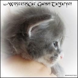 Gaemon 3 weeks old - profile