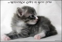 Gendry 3 weeks old