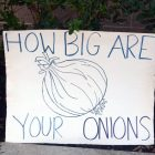 How big are your onions?