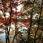 Forge-Pond-through-the-fall-trees-Oct-2015-adult-Mike-Wells-150x150