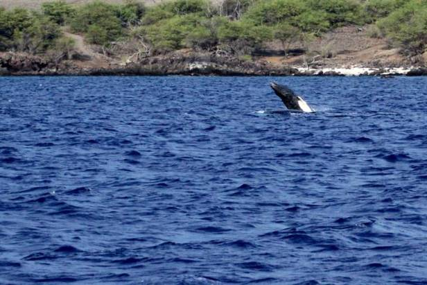 Island Life: Whale hello there
