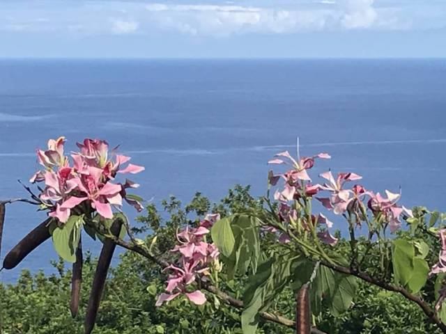 Island Life: View from the orchid