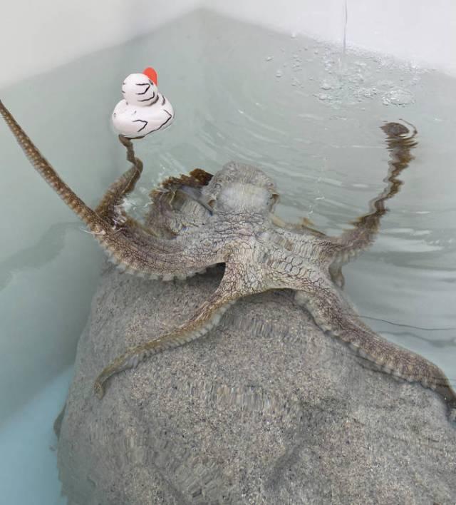 Island Life: Release the Quacken!