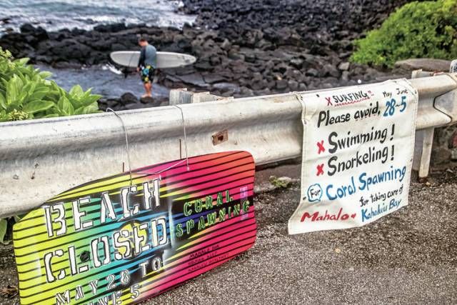 Healing the bay: Public asked to stay out of Kahaluu Bay for final days of spawning