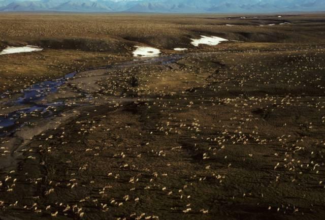 Biden suspends oil leases in Alaska's Arctic refuge