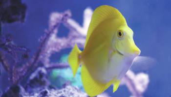 Aquarium industry submits revised EIS: Fishing permits, allowable species to be reduced
