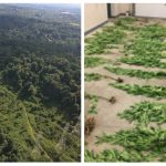 Pennsylvania State Police/West Mifflin Police uncover marijuana grow in wooded area