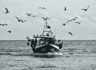 EU fishing