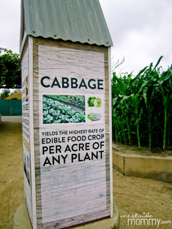 cabbage sign at Centennial Farm