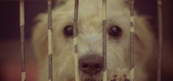 We visited NKLA Shelter because it is National Dog Day