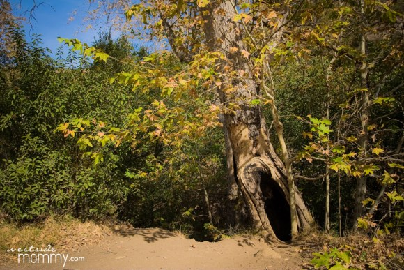 SolsticeCanyon_WSM_treehole01