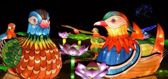 The Chinese Lantern Festival Will Light up the Night in Pomona Nov. 15 – Jan 6th