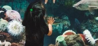 Our favorite exhibits at the Aquarium of the Pacific