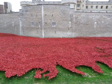 Tower of London – Ceramic Poppies