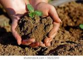The Organic System - Hands holding Soil