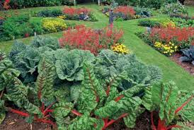 Edible Ornamentals
