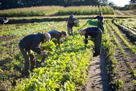 Farm Workers in Field The worst Diet in the World