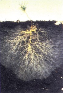 soil biome and plant nutrition