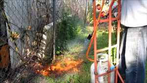 propane torch weed burner in action