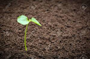 Fertile soil with seedling