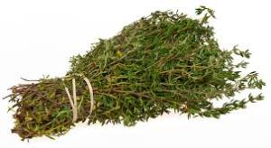 plant of the week - thyme