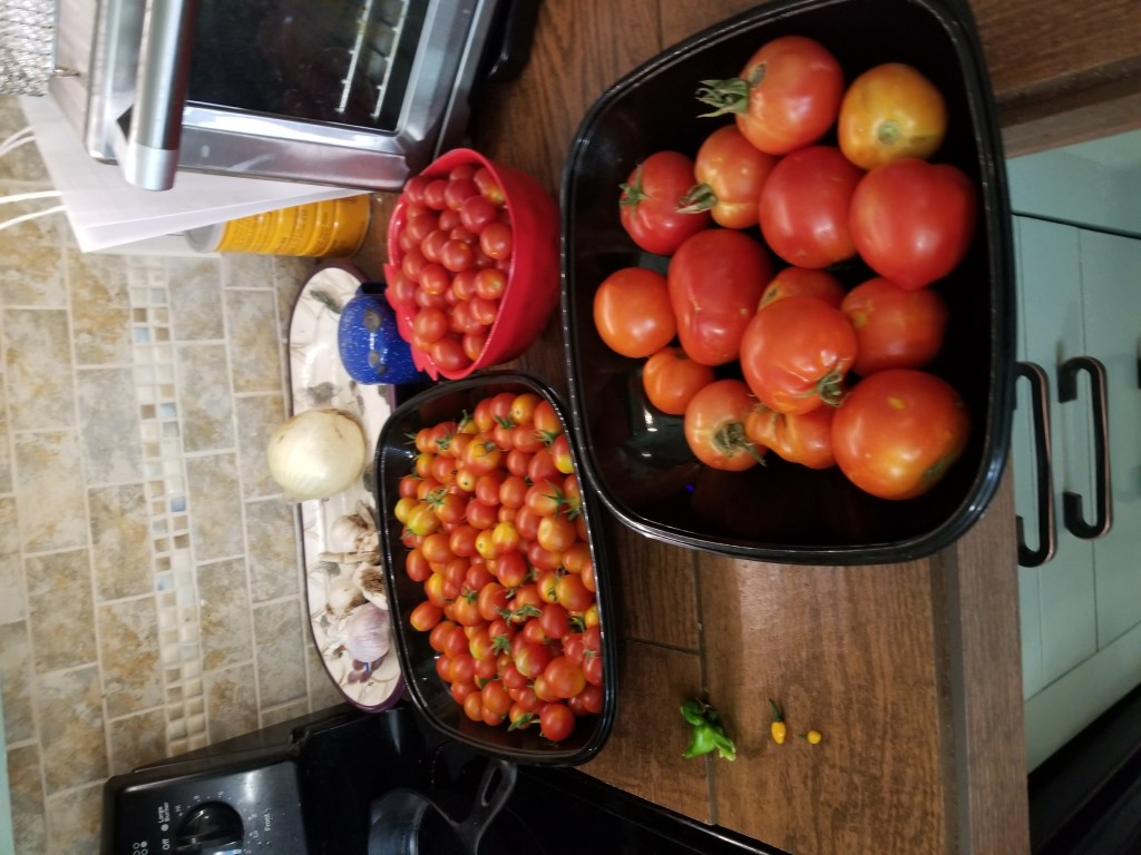 tomatoes in west texas - one harvest from our garden in July 2019