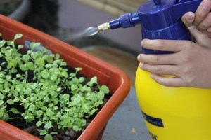 Foliar spraying and drenching small spayer