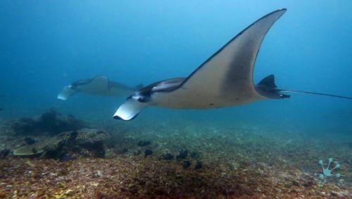 Подводные фото Комодо