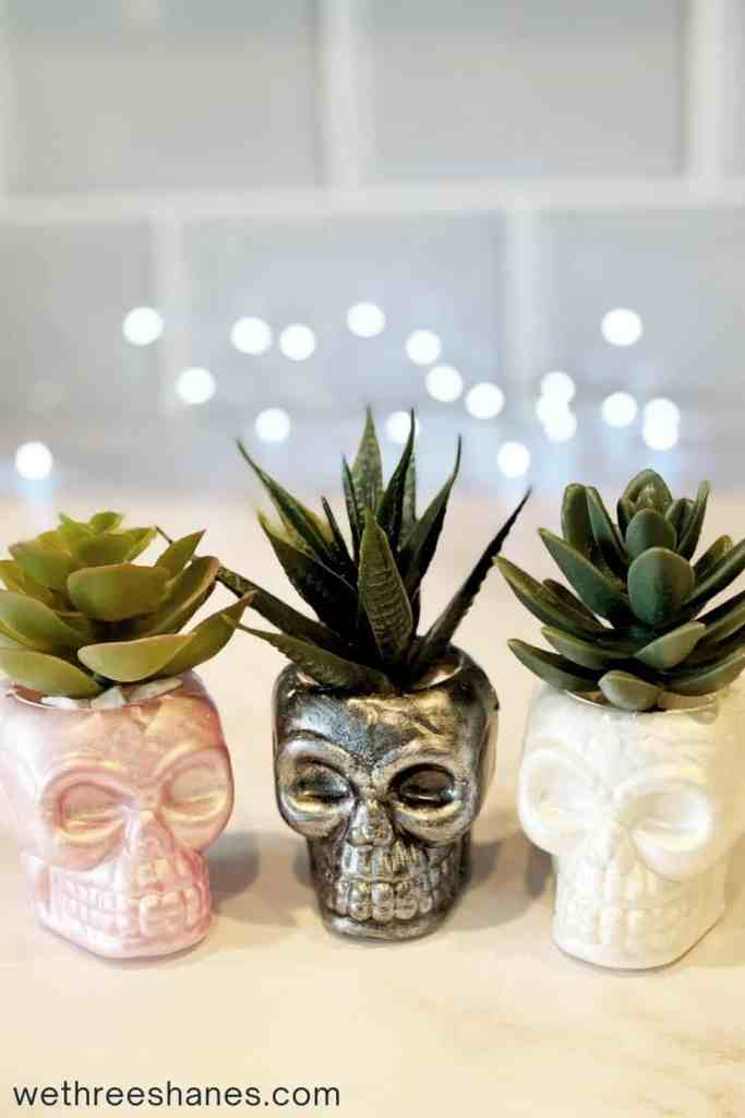 Make these adorable skull succulents to add to your home decor.   We Three Shanes