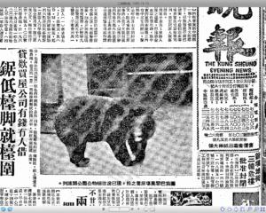 (不是戰鬥民族就不要和熊PK了﹕工商晚報1965-11-19)